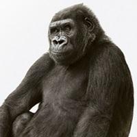 Corning Gorilla Glass, antiriflesso ed antibatterico per i Tablet PC del futuro
